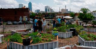 Agricool, Label Abeille et l'avenir de l'agriculture urbaine